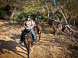 harties horse trails and safaris